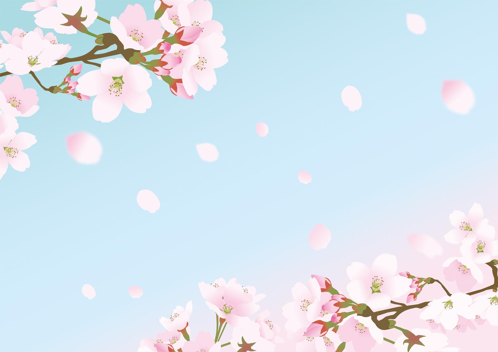 桜の花のバーチャル背景