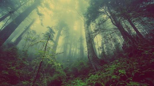 森林ののバーチャル背景